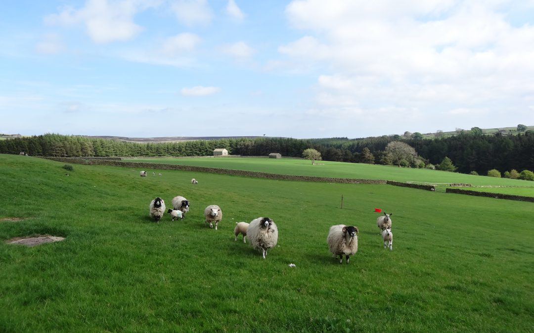 Natural England Update on Agri Environmental Payment Delays