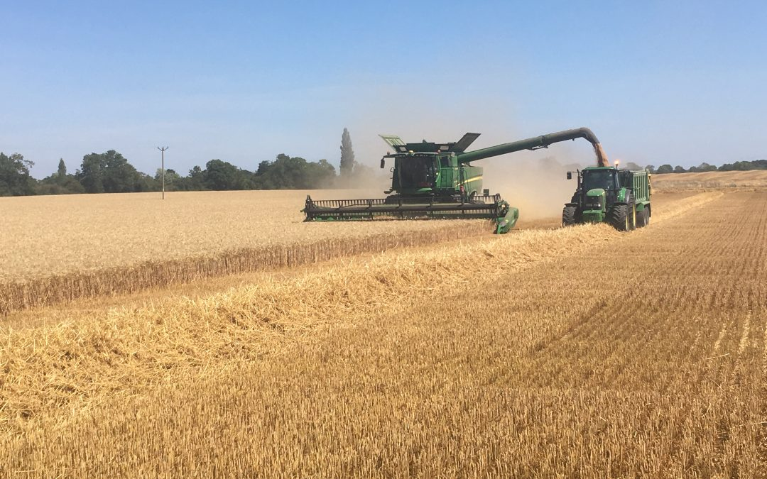 Farming Opportunity Sparks Considerable Interest