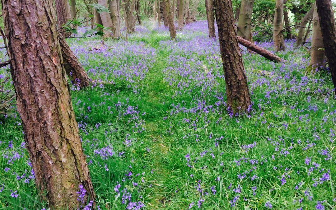 Woodland Scheme Set To Improve Atmosphere
