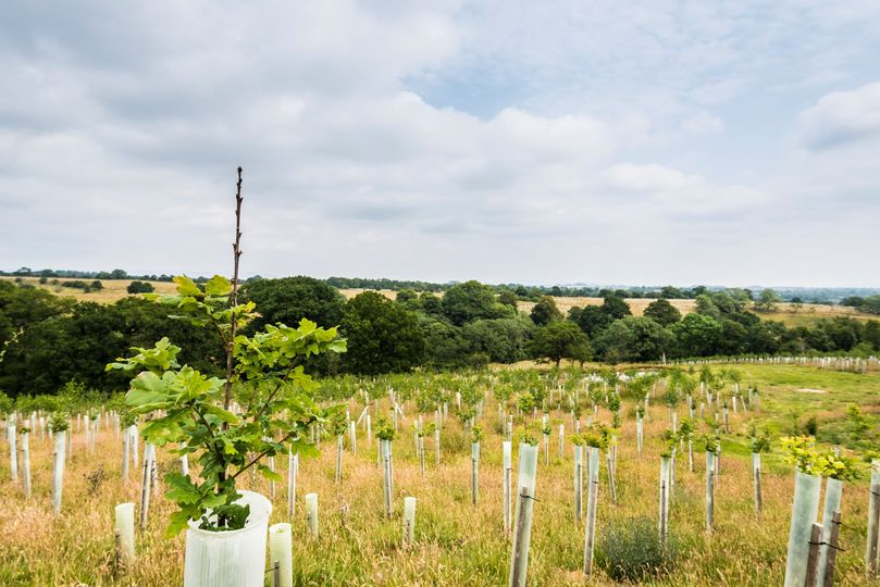 Third Woodland Carbon Guarantee auction – Open now for applications