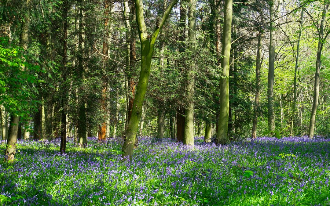 English Woodland Creation Offer