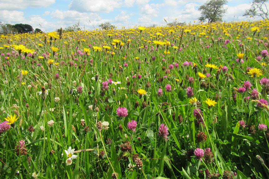 DEFRA Launches Farming In Protected Landscapes